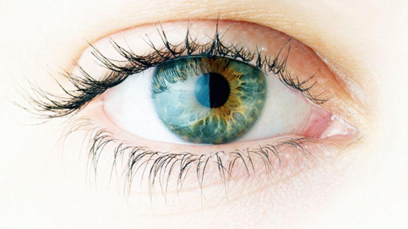 El ojo. Sensibilidad, vision, iluminacia, adaptacion