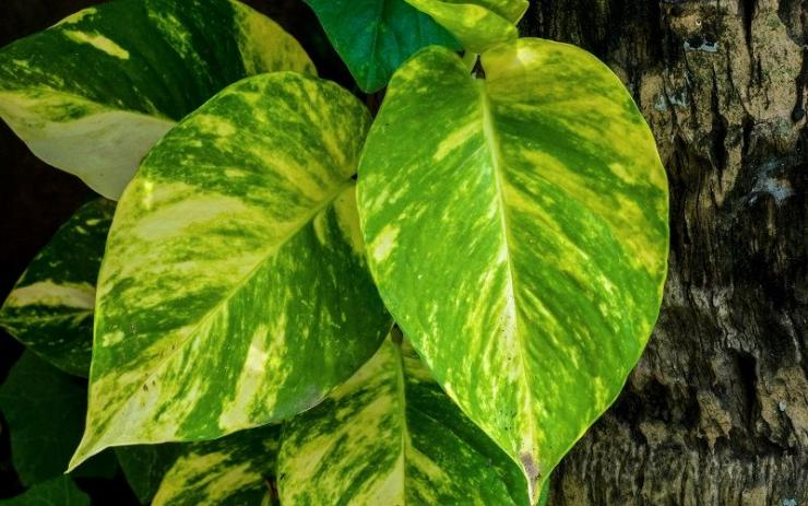 Irradiacion de las plantas, su iluminacion