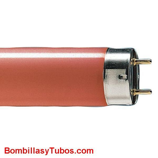FLUORESCENTE T8 18w/rojo - FLUORESCENTE 18w/60 ROJO  base: g13   medida: 26x590mm.   referencias:L 18/60 rojo,