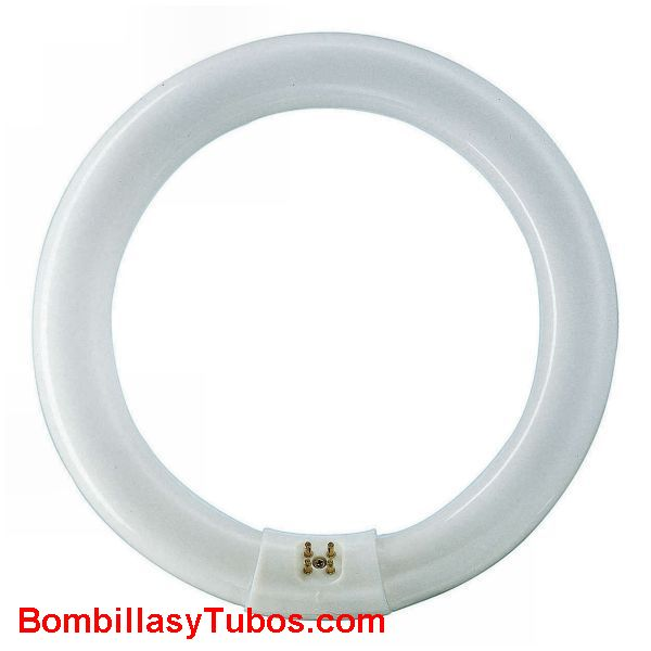 FLUORESCENTE T8 circular 22w-865 - Fluorescente 22w-865 circular  base g10q medidas: 30x216mm  referencias:lumilux de lux t8 fh. fh  he, master tl 8 he, luxline t8, bonalux t8